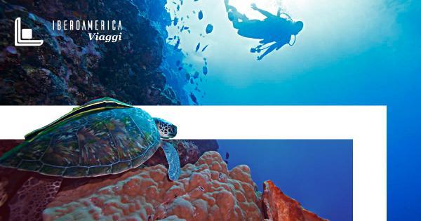 ECUADOR: 5 Animali Esotici delle Galápagos - Iberoamerica Viaggi Agenzia di Viaggio Roma