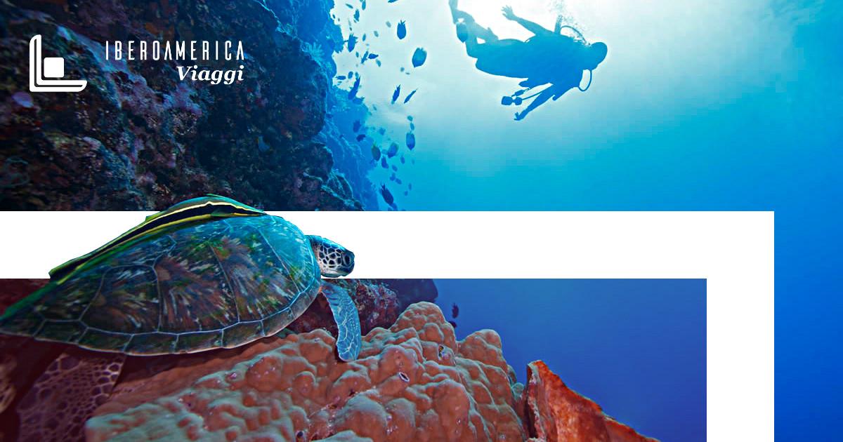 ECUADOR: 5 Animali Esotici delle Galápagos - Iberoamerica Viaggi Roma